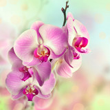 Beautiful pink orchid flowers on blurred background