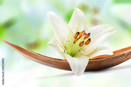 Beautiful white lily flower on a coco palm leaf - fototapety na wymiar