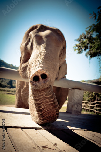 Photo  Elephant in Sanctuary