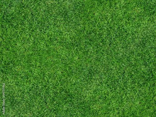Obraz Rasenfläche - fototapety do salonu