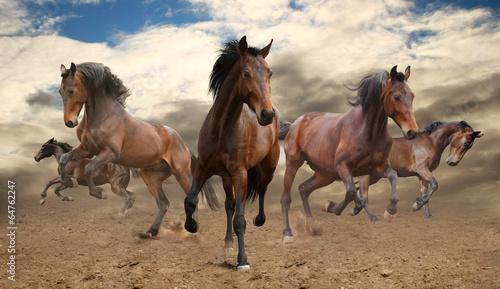 piec-niezlomnych-galopujacych-koni