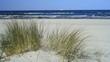 Ostseestrand mit Strandhafer