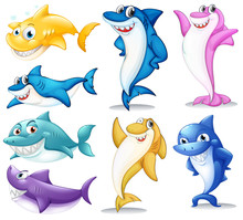 A Group Of Colorful Sharks