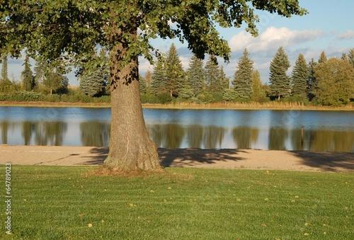 Baum am See © alisseja