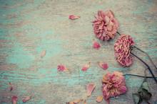 Dried Rose On Old Vintage Wood...