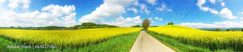Papiers peints Photos panoramiques Panoramaaufnahme Rapsfeld und Weg