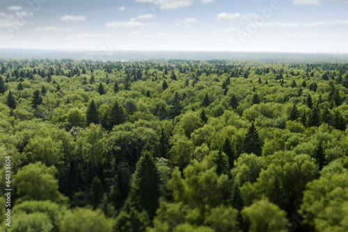 Foto op Plexiglas Bos flight over forest