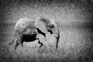Obraz na Szkle Słoń Elephant