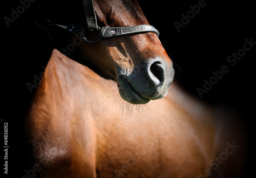Fotografija Horse