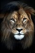 canvas print picture - African Lion