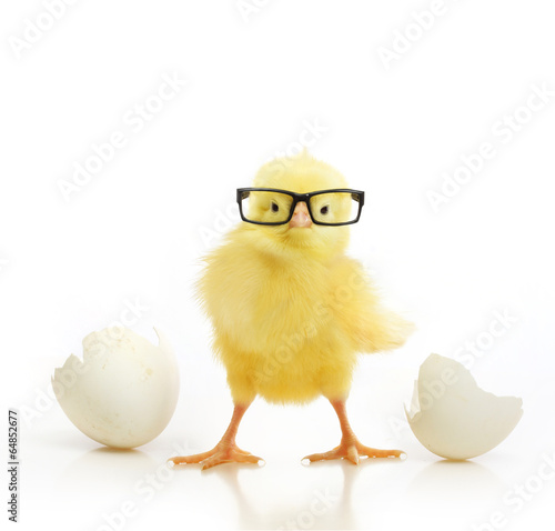 Keuken foto achterwand Kip Cute little chicken coming out of a white egg