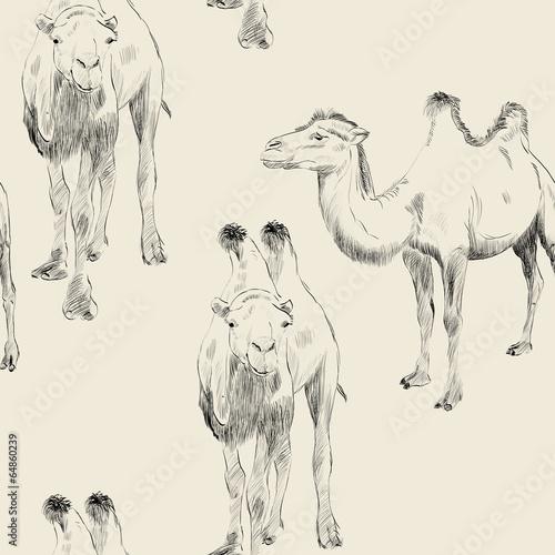 recznie-rysowane-wielblada