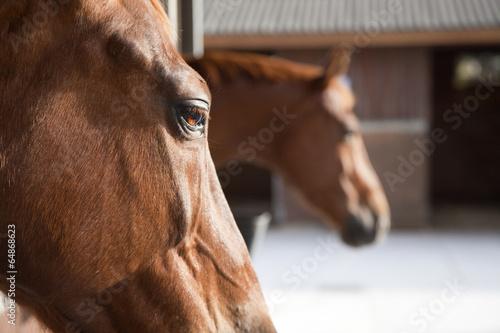 Fotomural  Primerísimo plano de caballo con cuadras de fondo