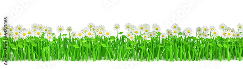 Fotografie, Obraz  Grass green with flowers isolated