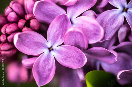 Spoed Foto op Canvas Lilac Closeup of Lilac flowers