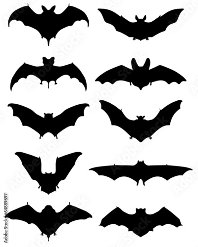 Fotografie, Obraz  Black silhouettes of different bats, vector illustration
