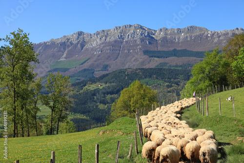 Carta da parati ovejas rebaño pastor país vasco 3932-f14