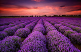 Fototapeta Krajobraz - Stunning landscape with lavender field at sunset