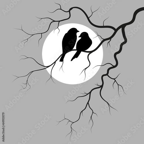 dwa-ptaki