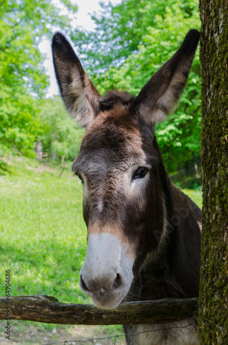 Foto op Canvas Ezel donkey in the park