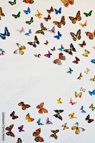 Fotografie, Obraz  Стая бабочек на сером фоне с пространством для вашего текста