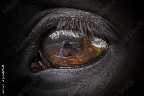 Horse Eye #64907462