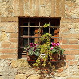 window protected with grating and flowering plants on windowsill