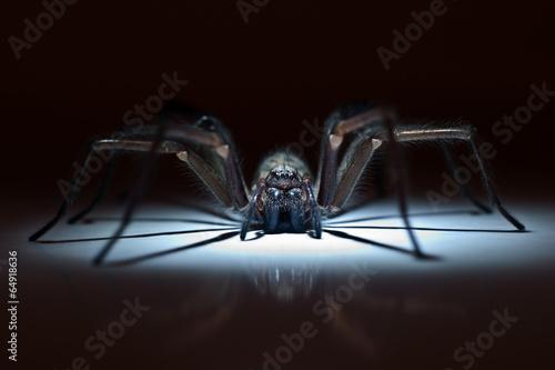 Photo  huge spider in ambush