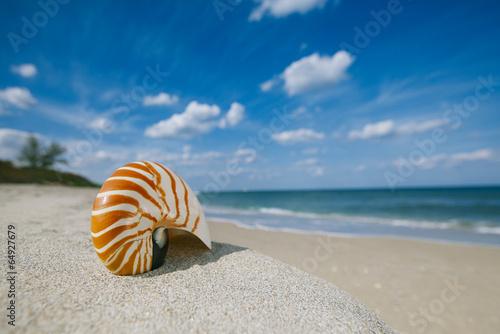 Fotografie, Obraz  nautilus shell on white Florida beach sand under the sun light