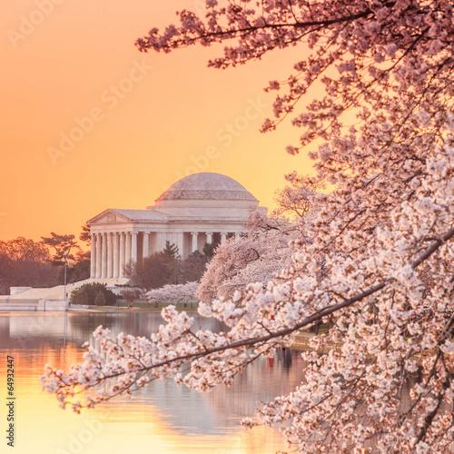 Photo sur Toile Lieux connus d Amérique the Jefferson Memorial during the Cherry Blossom Festival