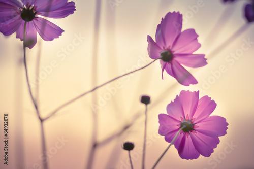 Floristischer Kosmos