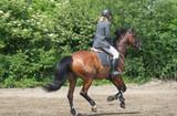 Fototapeta Konie - Girl riding a horse