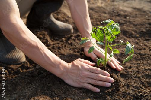 Fotografiet  農業
