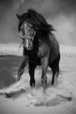 Czarny galopujący koń