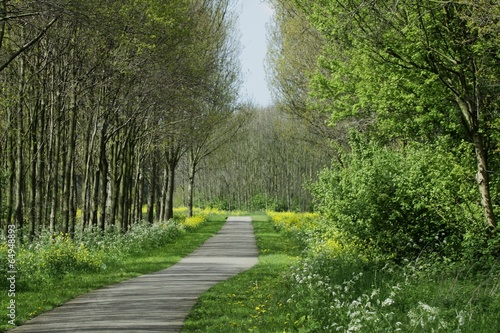 Fototapeten Natur Nederlands Doorkijkje