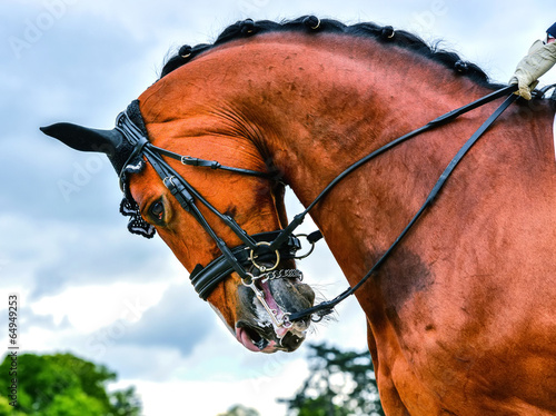 Photo  head of dressage horse and rider