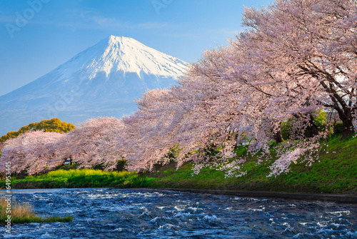 Spoed Foto op Canvas Japan Fuji and Sakura