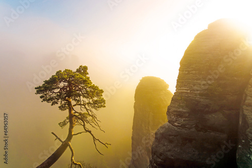 La pose en embrasure Bonsai Morgensonne bei Nebel im Gebirge