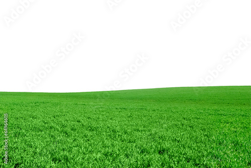 Foto op Plexiglas Weide, Moeras Green field of the young wheat on a white background