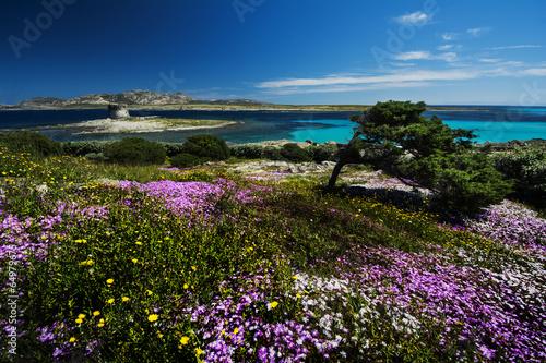 Photo  paradisiaca spiaggia  La Pelosa Sardegna