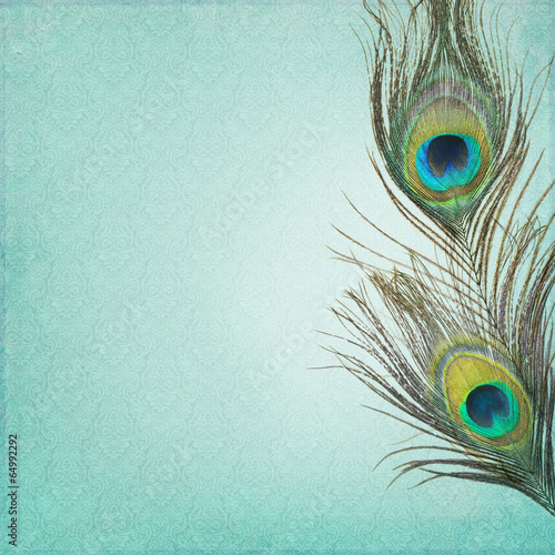 Valokuva  Vintage background with peacock feathers