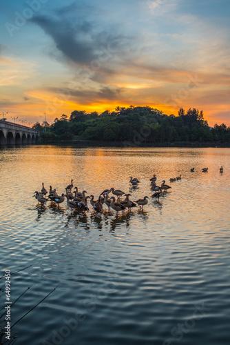 Staande foto Afrika Wild ducks and sunset at Putrajaya Wetland, Malaysia