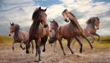 Fototapeta Konie - herd of horses