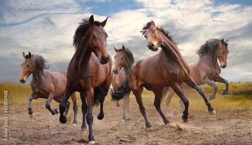 herd of horses Fototapete