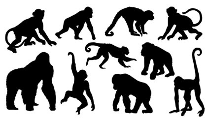 Fototapeta monkey silhouettes