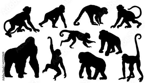 Naklejka premium sylwetki małpy