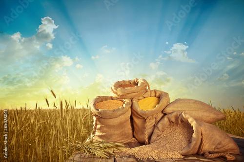 Fototapeta sacks of grain obraz