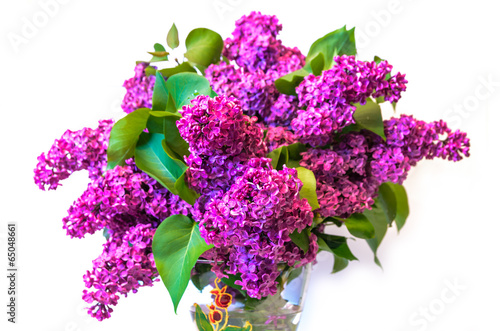 Foto op Canvas Lilac purple common lilac (syringa) in vase isolated on white backgrou