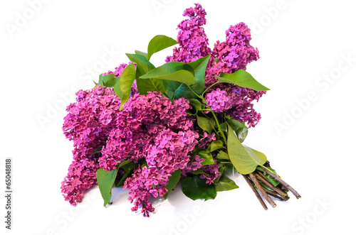 Foto op Canvas Lilac purple common lilac (syringa) bouquet isolated on white backgrou