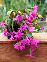 Easter Cactus On Wooden Box Wi...